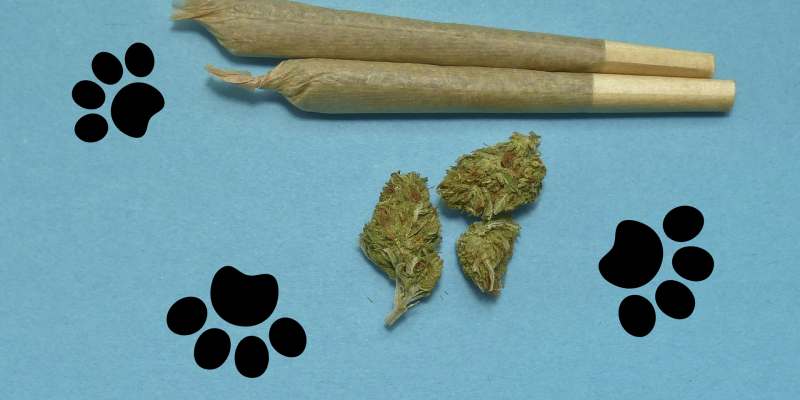 The Benefits of CBD Hemp to Dogs