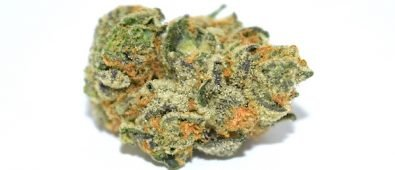5 Reasons Why Girls Scout Cookie Strain Is Popular